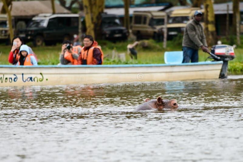 Os turistas olham os hipopótamos fotografia de stock royalty free