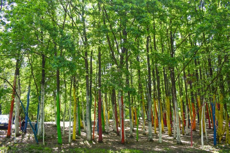 Os turistas vêm à floresta ou ao Padurea colorido Colorata Poienari, o TB0 0N Condado de Gorj, Romênia - 19 05 2019 3 imagens de stock royalty free