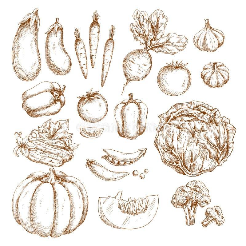 Os vegetais da exploração agrícola do esboço isolaram os ícones ajustados ilustração royalty free