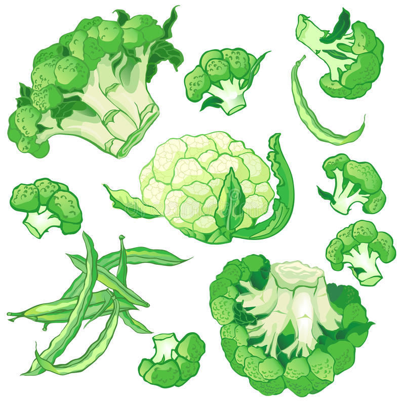 Os vegetais do vetor ajustaram-se com brócolis, feijões de corda verdes ilustração stock