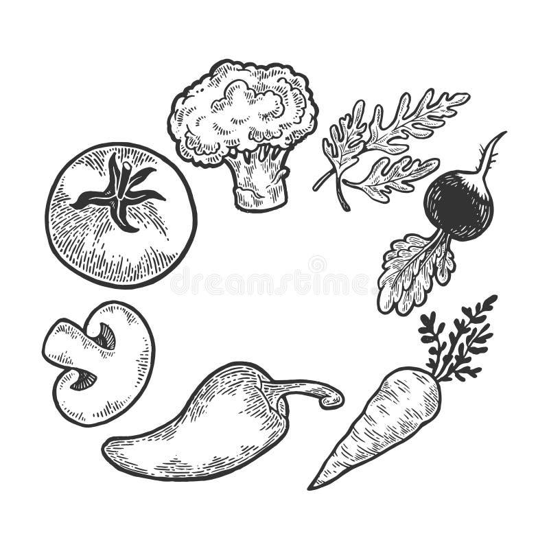Os vegetais esboçam a gravação do vetor ilustração do vetor