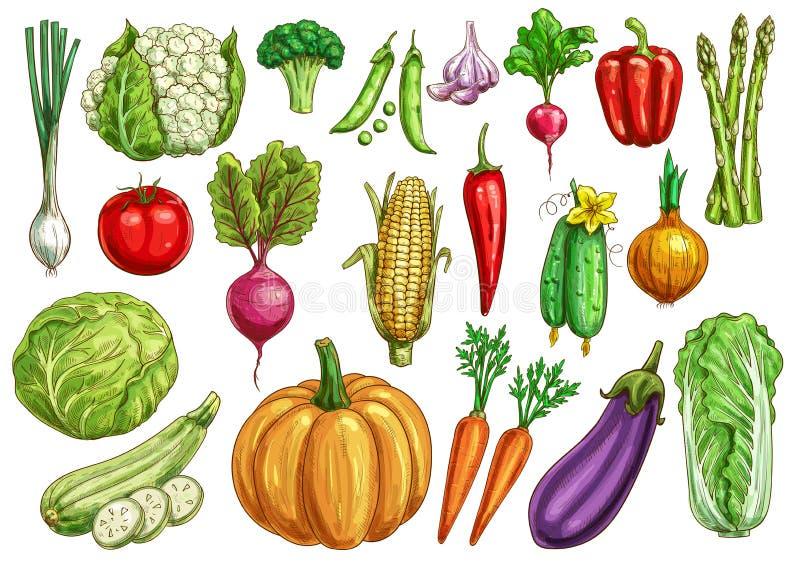Os vegetais isolaram o esboço ajustado com vegetarianos frescos ilustração do vetor