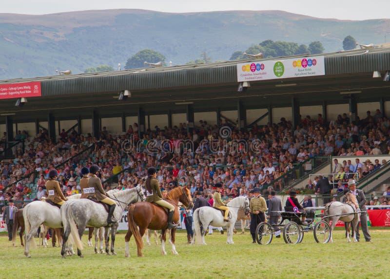 Os vencedores desfilam para cavalos na mostra de galês real fotos de stock royalty free