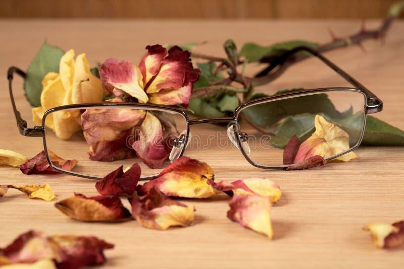 Os vidros e secam cor-de-rosa com o ascendente próximo das pétalas fotografia de stock royalty free