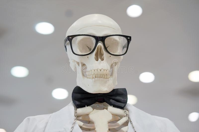 Os vidros vestindo do esqueleto e um laboratório branco revestem imagem de stock royalty free