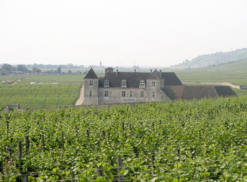 Os vinhedos de Clos de Vougeot, Borgonha, France imagens de stock royalty free