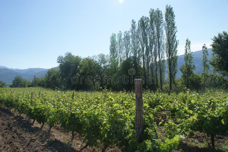 Os vinhedos de Demir Kapija, Macedônia imagens de stock royalty free