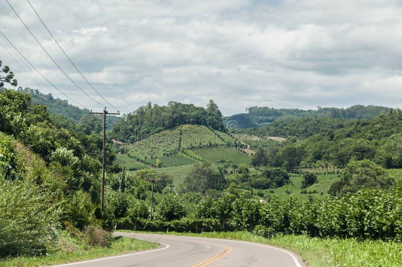 Os vinhedos em Rio Grande fazem Sul imagens de stock royalty free