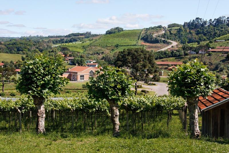Os vinhedos em Rio Grande fazem Sul fotografia de stock royalty free