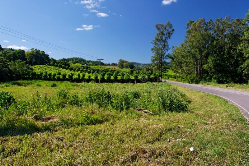 Os vinhedos em Rio Grande fazem Sul imagem de stock