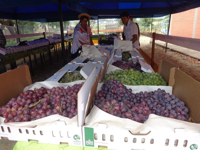 Os visitantes à validação das uvas, singanis wines imagens de stock