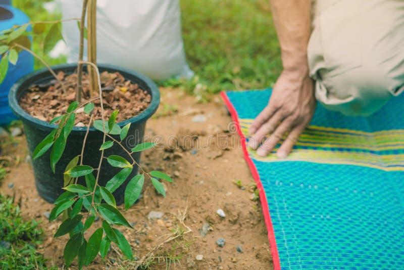 Os voluntários preparam-se para plantar árvores foto de stock