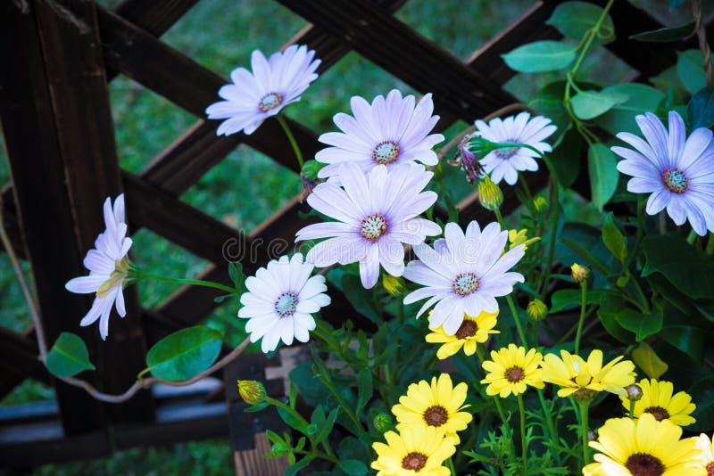Os wildflowers abertos preguiçosos ao longo da cerca ilustração stock