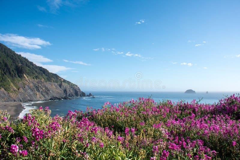Os wildflowers cor-de-rosa roxos crescem ao longo do litoral de Oregon Dia ensolarado imagem de stock royalty free