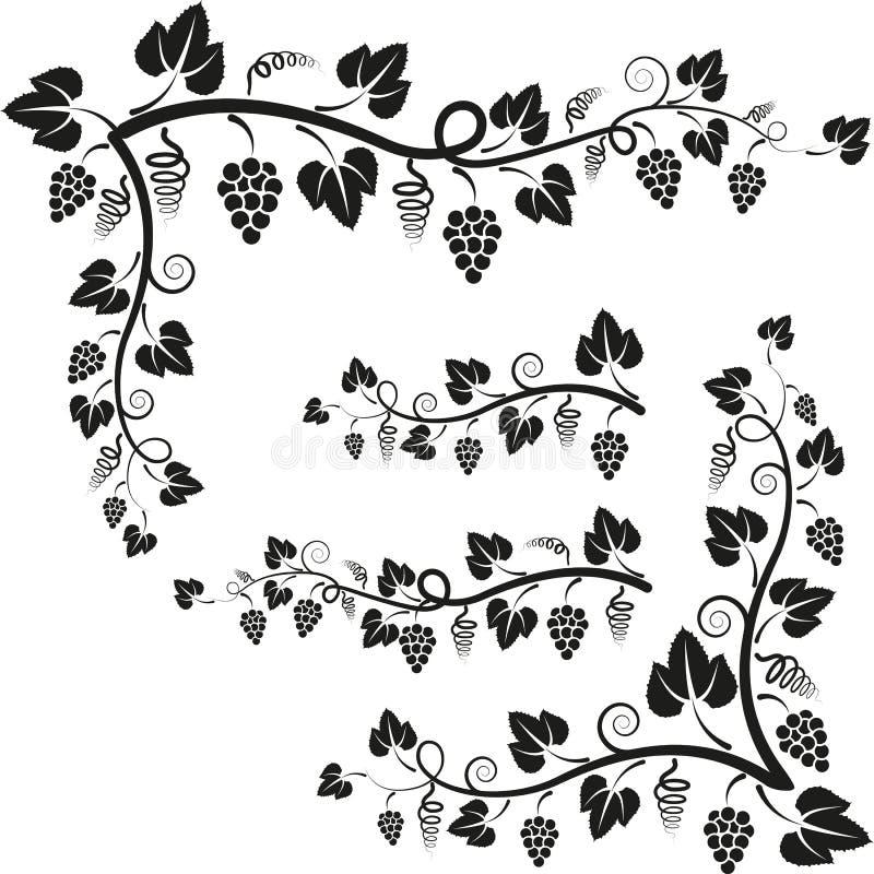 Osacza winogradu ilustracji