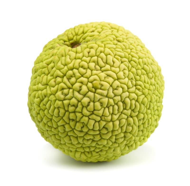 Osage apelsin royaltyfria foton
