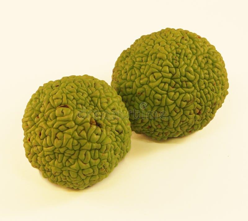 Osagesinaasappel - Maclura stock foto