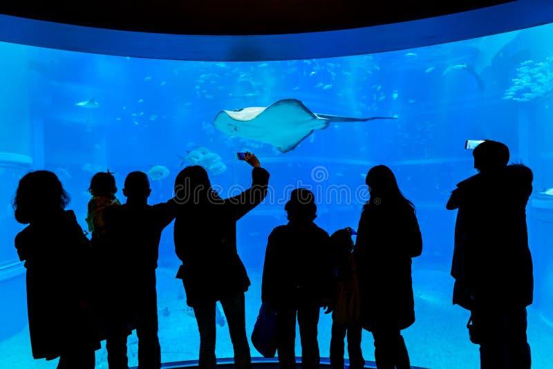 Osaka Aquarium stock photography