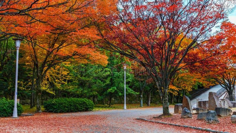 Osaka Castle-tuin in de herfst stock afbeelding
