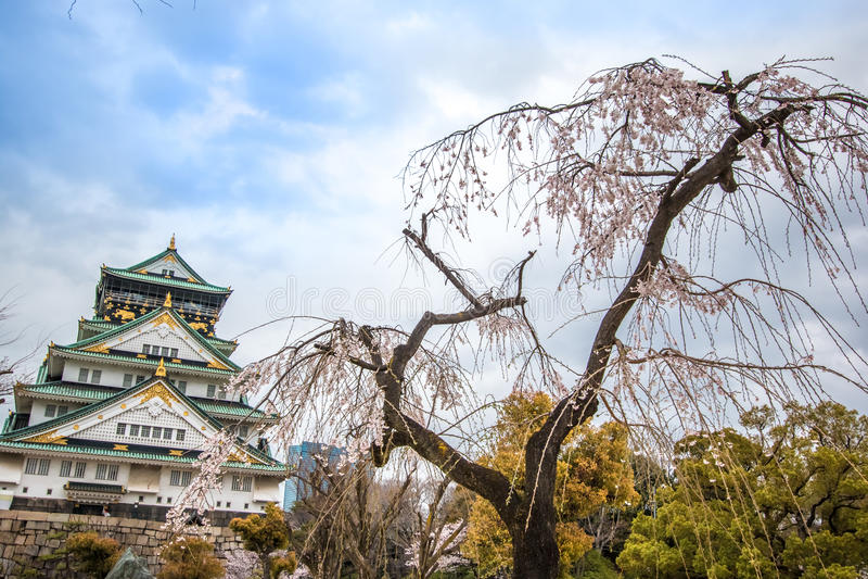 Osaka Castle und Kirschblüte blühen in Osaka, Japan lizenzfreie stockbilder