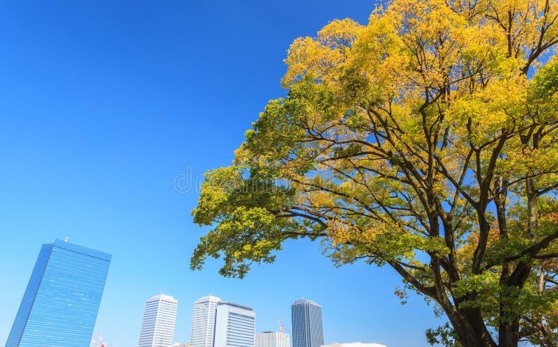 Osaka cityscape med det härliga gula trädet i höstsäsong på Osaka royaltyfri foto