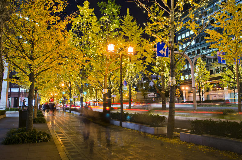 OSAKA, JAPAN - DECEMBER 9, 2015: Een ginkgoboom in Midosuji-straat van Osaka, Japan stock fotografie