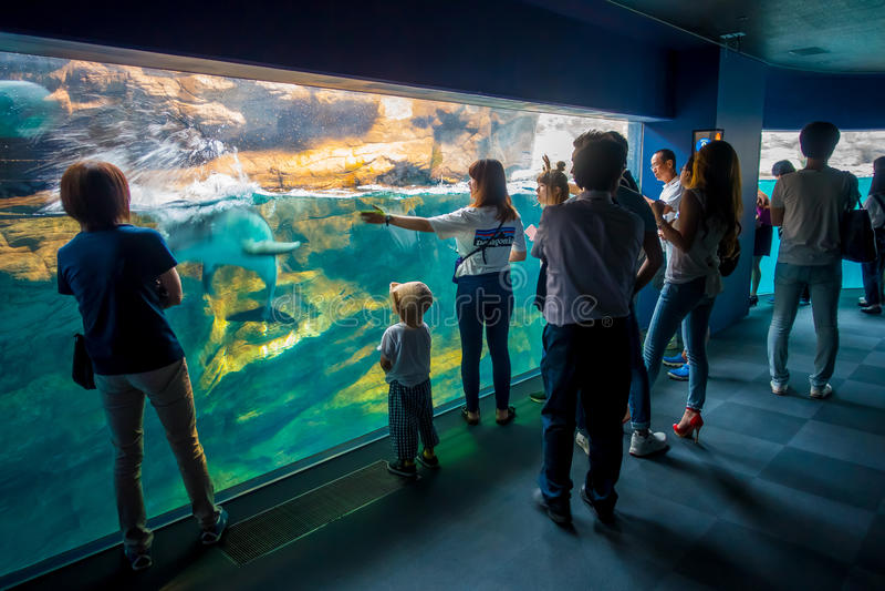 OSAKA, JAPAN - JULI 18, 2017: Dolfijn in Osaka Aquarium Kaiyukan, één van de grootste openbare aquariums in de wereld binnen royalty-vrije stock foto