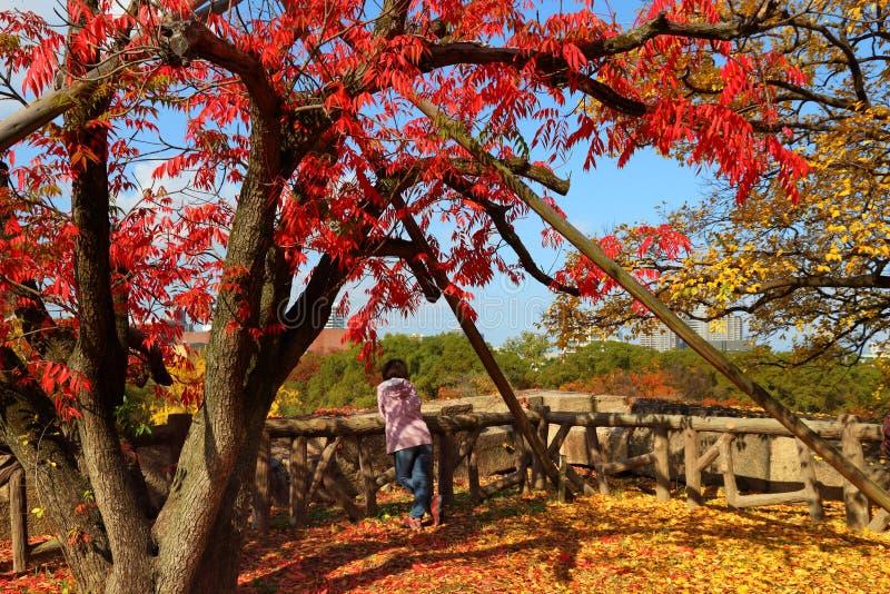 Osaka, Japon photos libres de droits