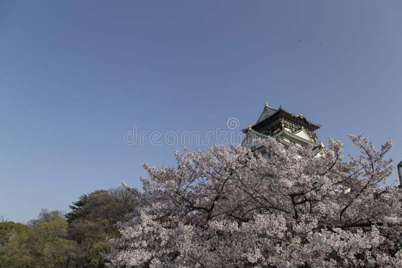Osaka kasztel wśród czereśniowych okwitnięć na słonecznym dniu zdjęcia stock