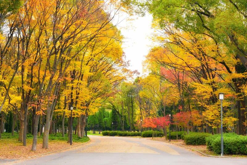 Osaka Park at autumn. Osaka Park, around Osaka castle at autumn, Japan stock photo