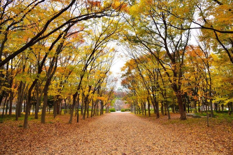 Osaka Park en el otoño fotografía de archivo libre de regalías
