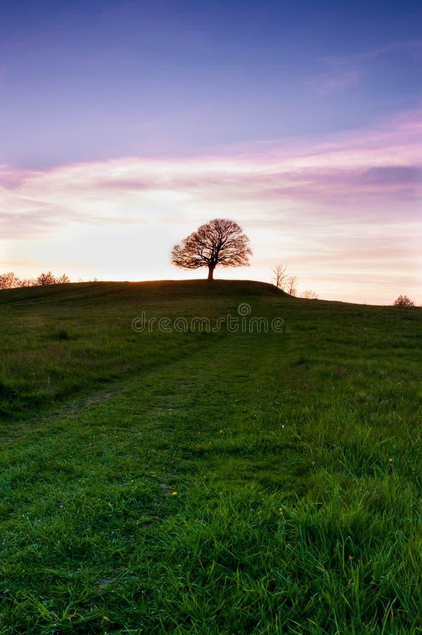Osamotneni drzewni agains zmierzch zdjęcie royalty free