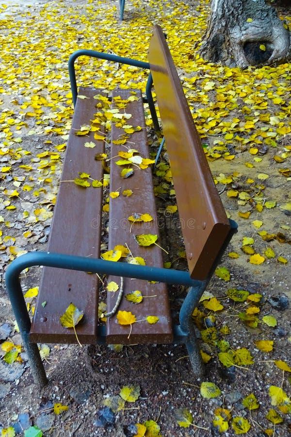 Osamotniona ławka otrzymywa jesień zdjęcie royalty free