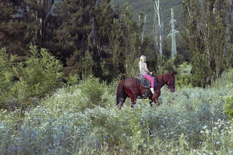 Osamotniona śliczna młoda dziewczyna jedzie w siodłowej jazdie brązu konia w lesie lub parku przy zmierzchem Dziewczyny pewnie ko fotografia stock