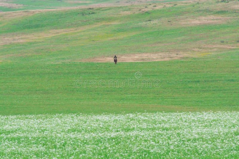 Osamotniona baca na koniu Krocia bia?e stokrotki zielone wzg?rza Lato sezon zdjęcie stock