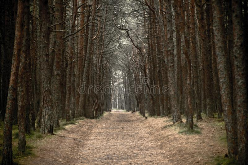 Osamotniona droga w mglistym jesień lesie obrazy stock