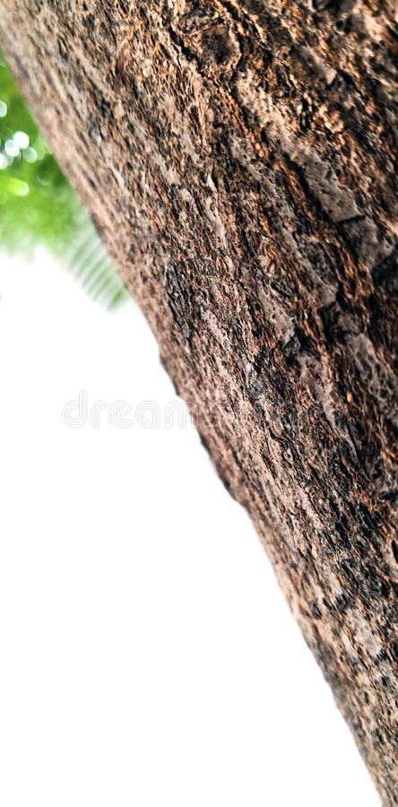 Osamotniona drzewna barkentyna w ogródzie fotografia stock