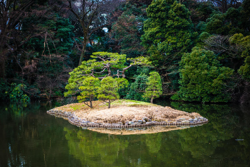 Osamotniona drzewna wyspa w Shinjuku Gyoen parku fotografia royalty free