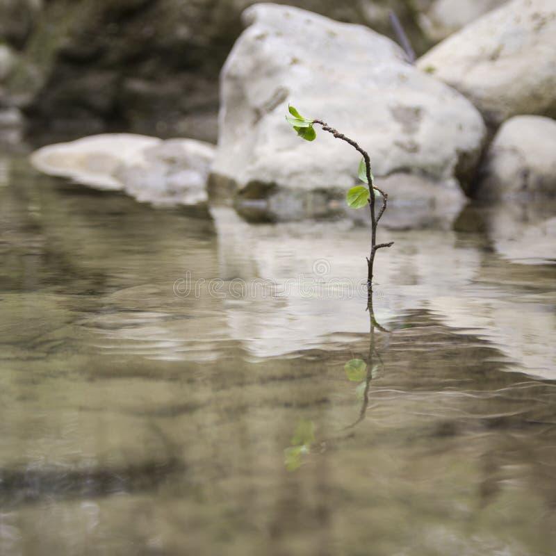Osamotniona roślina obrazy stock