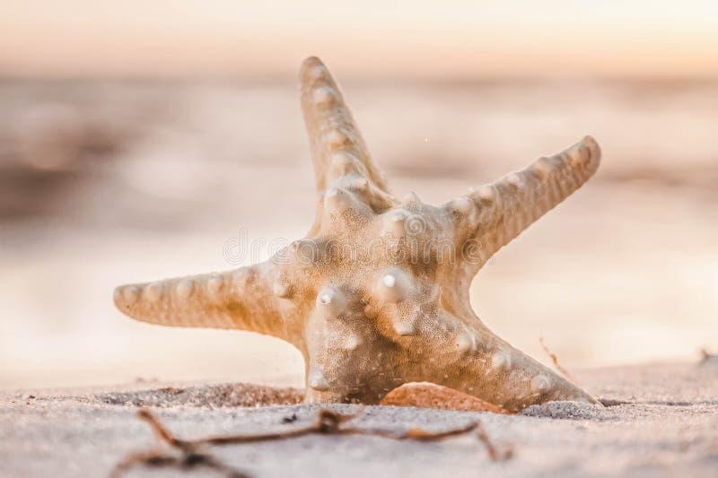 Osamotniona rozgwiazda na piaskowatej plaży przeciw tłu złoty morze obrazy stock