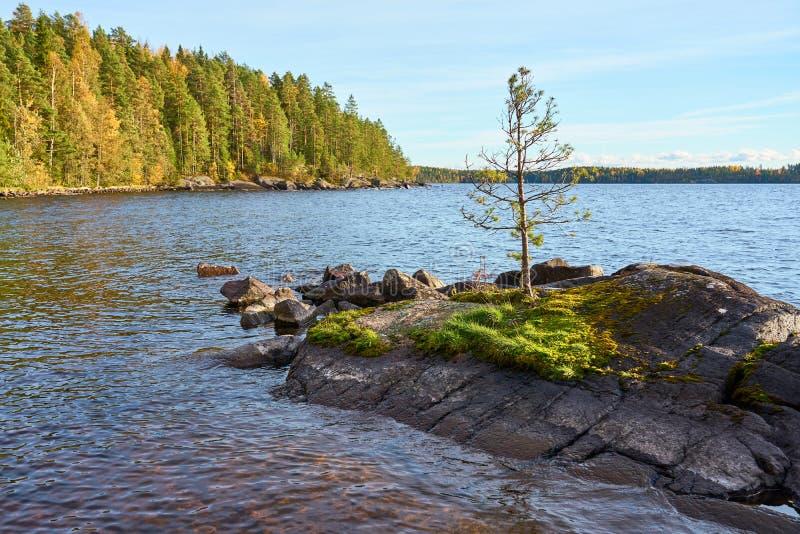 Osamotniona sosna na skalistej wyspie po środku jeziora pod błękitnym chmurnym niebem fotografia stock