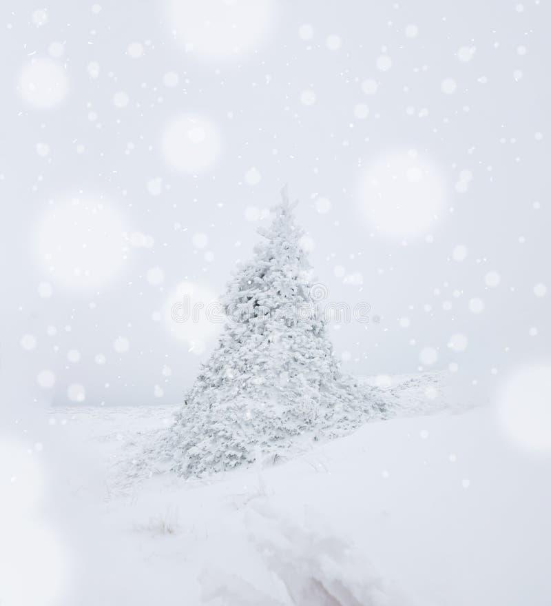 Osamotniona sosna w ciężkiego śniegu spadku środku zima obraz stock