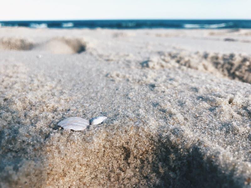 Osamotniony łamający seashell na plaży obraz royalty free