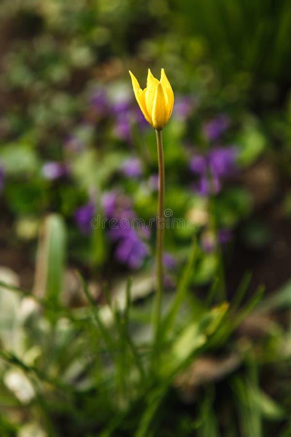 Osamotniony żółty kwiat w ogrodowym parku zdjęcia royalty free