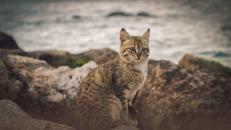 Osamotniony br?zu kota spojrzenie przy morzem obraz stock