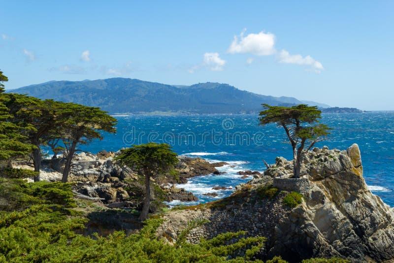 Osamotniony cyprys, Carmen i Monterey, Kalifornia, Usa zdjęcie stock