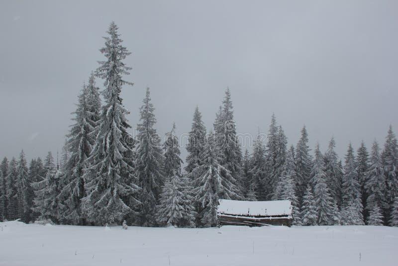 Osamotniony dom w śnieżystym lesie, Carpathians zdjęcia royalty free