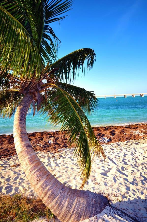 Osamotniony Drzewko Palmowe zdjęcia stock