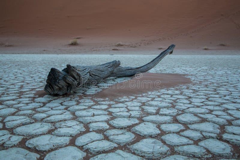 Osamotniony drzewny fiszorek w pustyni obrazy stock