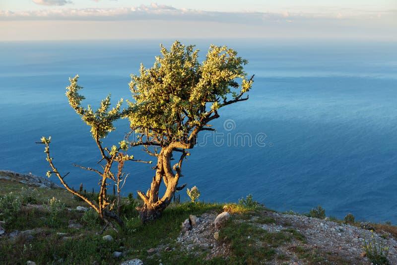 Osamotniony drzewny tło Czarny morze przy wschodem słońca na górze halnego Ilyas Kaya zdjęcia stock